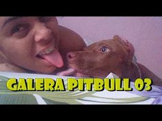 🎥 Galera Pitbull Grupo Whats Cães Brasil