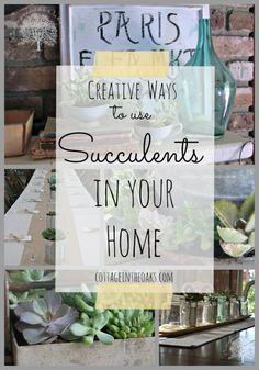 Succulents and creative ways to plant and use them