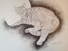 "Pencil drawing of a cat  - ""Jack"", The ginger sleeping cat"