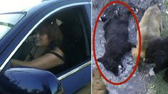 Mother runs over stray dog on purpose in front of daughter in Chile! Act Now! | YouSignAnimals.org
