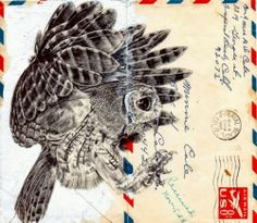 Owl Drawing on Envelopes