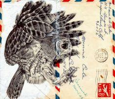 Owl Drawing on Envelopes