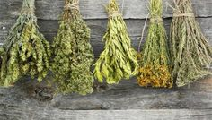 How to Harvest and Dry Herbs. Low moisture plants can be hang-dried while high moisture herbs need to be dried in the oven. This link provides instructions on both methods.