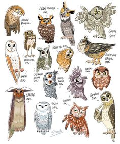 I have recently developed an owl fascination. As an art student/crafty person in general I do. Animal Sketches, Animal Drawings, Art Drawings, Illustration Inspiration, Illustration Art, Owl Art, Bird Art, Owl Pictures, Arte Sketchbook