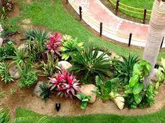 Tropical garden plants