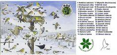 Montessori Science, Preschool Crafts, Biology, Birds, Education, Winter, Gardening, Pictures, Photograph Album