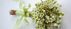 Waxflower Bouquet