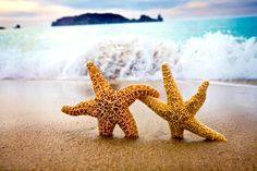 Star-crossed Starfish ♥ ♥
