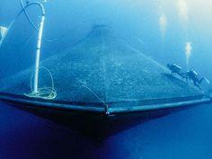 Hawaii Ocean Underwater | Open Ocean Aquaculture in Hawaii – by Charles E. Helsley, Emeritus ...