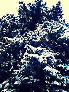 snow on tree by Jewel Brunk