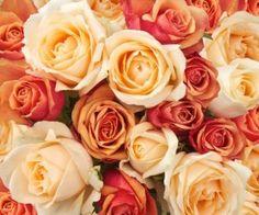 Il significato dei fiori: un fiore per ogni emozione