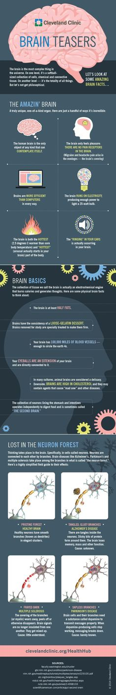 A few of the secrets behind the inner workings of your brain (View only)