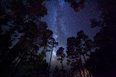 Heaven's Canopy by Karim Iliya Photography, via Flickr