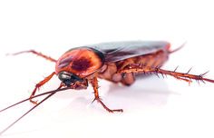 Spearhead pest control are providing an effective way for removal of these highly unsanitary pests like cockroaches. Removal Services, Pest Control, How To Remove, Animals, Animales, Animaux, Animal, Animais, Bed Bugs Treatment