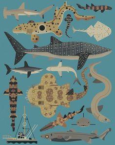 requins_opt (2)