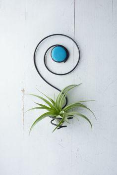 Planta de aire titular  espiral colgante con Perla de cristal