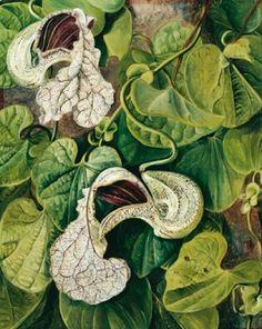 gallery-bloom16 | lidewij edelkoort