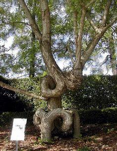 İlginç Ağaçlar