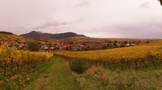 Ein wunderschöner Herbsttag in Rheinland-Pfalz. In diesen Weinbergen wurden die Trauben bereits geerntet, aus denen die leckeren Pfälzer Weine hergestellt werden. In der Pfalz gibt es außerdem schönen Schmuck. Besuchen sie unsere Seite www.jewels24.de um weitere Informationen zu erhalten. #weinberg #pfalz #weinrebe #trauben #wein