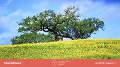 """""""La #naturaleza no hace nada en vano"""" (Aristóteles). #SienteHuelva. / """"#Nature does nothing in vain"""" (Aristotle). #ExperienceHuelva  http://www.turismohuelva.org/es/producto/naturaleza"""