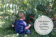 Pick peaches, then make something yummy! Perfect late summer activity.