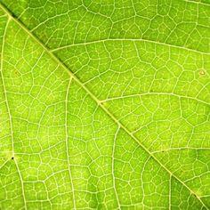 بعد الكتاب سيكون هدفنا في اﻷسبوع الثالث هي أوراق اﻷشجار. الشرط اﻷساسي هو ظهور ورقة/أوراق شجرة بشكل واضح وتكون هي العنصر اﻷساسي في الصورة، و يمكن أن تكون الورقة خضراء أو جافة.  أرجو إضافة الوسوم التالية للصورة: #ورقة #أوراق #ورقة_شجرة #أوراق_أشجار #Leaf #Leaves ويمكن كذلك إضافة اسم الشجرة كوسم.   الموعد:  البداية من يوم اﻹربعاء 15-1-2014 وحتى يوم الثلاثاء 21-1-2014  القواعد العامة للأسبوع الماضي تنطبق هنا أيضاً، وهي:  - ان تكون الصورة التقطت من قبلك خلال الفترة المحددة في اﻷعلى. -اﻻلتزام… Plant Leaves, Plants, Flora, Plant, Planting
