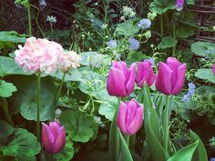 Another Tulip #tulip #travel #travelling #happy #piknik #tamasha
