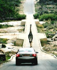Kruger Park - South Africa RECOMMANDE PAR CLEMENCE WYCKAERT