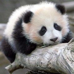 It looks SO sad. Which makes it MORE cute!