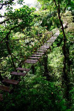 pathway thru the trees...