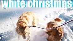 SNOW DOGGiES! | JSY VLOGS