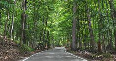 Northern Michigan scenic road