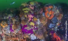Corals at Algoa Bay Hope Spot Visit South Africa, Marine Environment, Marine Conservation, Corals