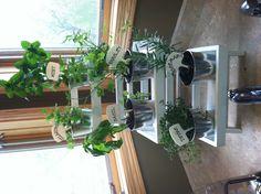 Mini herb garden behind the corner kitchen sink