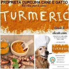 Curcuma cane dosi, vediamo la ricetta, la prima curcuma biodisponibile per i nostri Pets; la curcuma che cura il cane e il gatto.