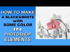 Photoshop Elements - Black and White with Some Color - YouTube