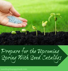 Prepare for the Upcoming Spring With Seed Catalogs -- Feeling optimistic like I am and looking towards the spring instead of the bizarre winter weather we've been having? Start browsing seed catalogs for ideas of what to plant in your garden. Our regular gardening contributor Janice Lilly has some wonderful tips that can get you well on your way to planning for spring!