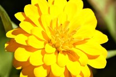 yellow flower #yellow #flower