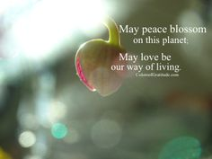 May #peace #blossom on this #planet; may #love be our way of #living. #colorsofgratitude #flyhighrootdeep #gratitude