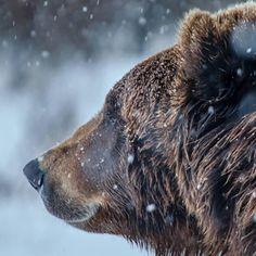Bear Animal Medicine | SouLodge | Pixie Lighthorse