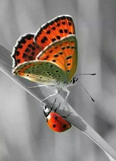 Butterfly & Ladybug - SUCH AN INCREDIBLY BEAUTIFUL SHOT!! ⭕️