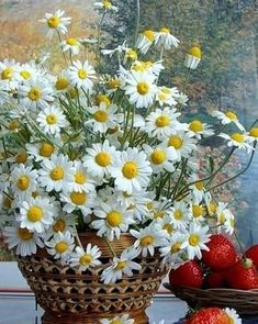 Shared by Sony Domm. Find images and videos on We Heart It - the app to get lost in what you love. Little Flowers, My Flower, Flower Power, Happy Flowers, Wild Flowers, Beautiful Flowers, Sunflowers And Daisies, Daisy Love, Garden Trellis