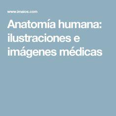 Anatomía humana: ilustraciones e imágenes médicas