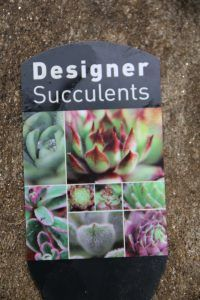 Where to find out what your succulents are