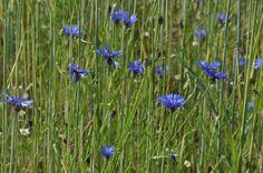 Texel is een en al natuur en internationaal beroemd om zijn vogels en planten, en bloemen. Wandelroute Krimbos neemt je mee door een begin jaren tachtig aangeplant bos in  het noorden van het eiland. Wandel 4 km langs een gevarieerd bos met bloemrijke open plekken en watertjes. Start: Roggeslootweg, De Cocksdorp. Volg blauwe route.