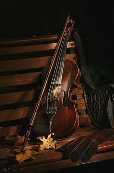 Geige - Violine / Violin + Musik Instrumenten / Musical Instruments + Bank / Gartenbank / Parkbank - Bench in the Park / Garden Bench