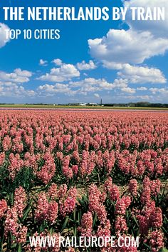 TOP 10 NETHERLANDS BY TRAIN PIN