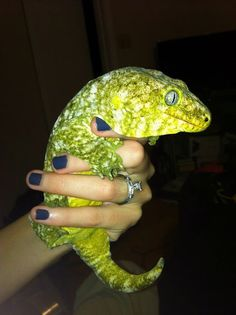 Cold hearted but can still melt her heart ❤️ Leachie Gecko, Crested Gecko, Cute Creatures, Beautiful Creatures, Animals Beautiful, Cute Reptiles, Reptiles And Amphibians, Animals And Pets, Baby Animals