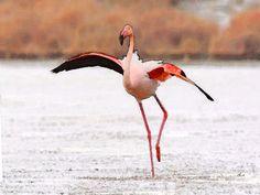 'Flamingo-Tanz' von Dirk h. Wendt bei artflakes.com als Poster oder Kunstdruck $18.03