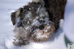 Here's Gabe in the snow after our snowstorm Friday